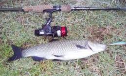LA RICETTA DEL MESE – pesce del Garda: GIRELLA DI CAVEDANO AL BURRO E TIMO