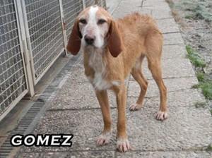 GOMEZ72