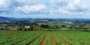 Determinazione dei Valori Agricoli medi per il 2012, concordato dai Membri della Commissione Provinciale Espropri nella seduta del 23 gennaio.