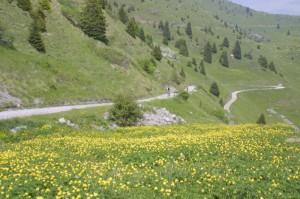 Parco-alto-Garda1