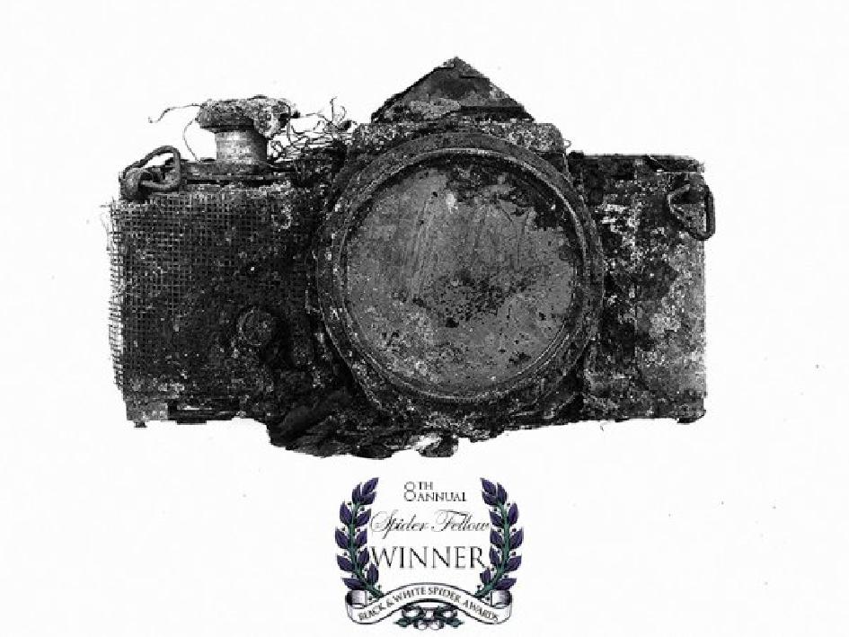 f38f_spider-award-winner