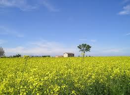 Veneto Agricoltura campagna