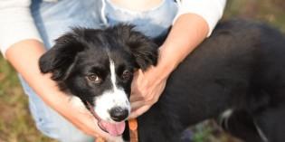 Intorno al Garda – Dalla mente al cuore: è così che noi e i nostri cani ci capiamo e… ci amiamo