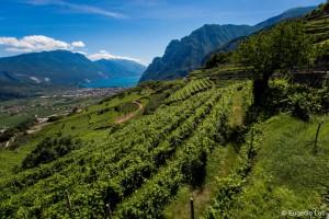 Agraria Riva del Garda - foto di E.Luti - lr