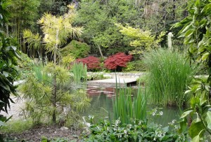giardini del benaco 5