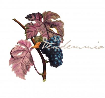 Vendemmia - Via Montenapoleone 2015 - Logo