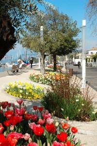 Bardolino (Vr) Tulipani