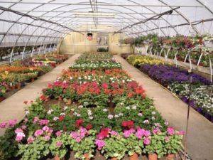fiori-serra-fotolia-750