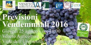 VENDEMMIA 2016: NEL VENETO E' PARTITA IL 22 AGOSTO