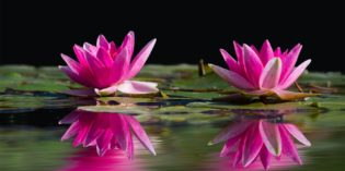 Fiorista o floral designer? Consigli e suggerimenti per portare avanti entrambe le attività