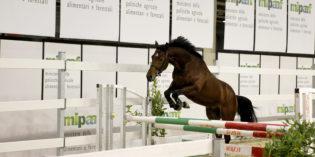 Verona, Fieracavalli 2016: superata quota 160mila visitatori, di nuovo record tra sport e turismo equestre
