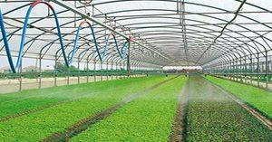 Florovivaismo: Defiscalizzare il verde privato per rilanciare il settore del florovivaismo e far emergere l'economia sommersa.