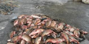 Verona: vigilanza sulla pesca, ora le sanzioni diventano penali