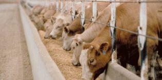 VERONA: FIERAGRICOLA RAFFORZA LA FILIERA MANGIMISTICA E NUTRIZIONE ANIMALE