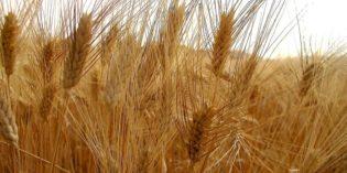 Confagricoltura Verona: nel 2016 prezzi ancora in calo per l'agricoltura