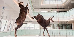 """Trento: San Valentino al MUSE è… imparare a leggere le """"regole d'amore"""" del mondo animale"""