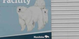 I viaggi della Zia Marisa: TRA GLI ORSI POLARI – Viaggio alla Baya di Hudson a Churchill in Canada