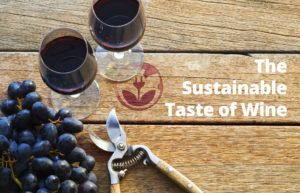 Campagna-The-Sustainable-Taste-of-Wine
