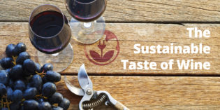 ForGreen: al via la campagna The Sustainable Taste of Wine