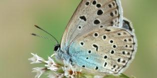 Parco Natura Viva: INSETTI A RISCHIO ESTINZIONE, TRA DI LORO ANCHE IL 13% DELLE LE FARFALLE ITALIANE