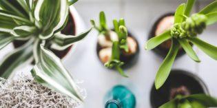 I benefici del pollice verde: non solo estetica, ma anche salute e funzionalità