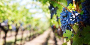 Degustazione di vini nelle migliori cantine del centro Italia: scopri il tour ideale