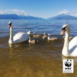 Desenzano del Garda. INQUINAMENTO NEL LAGO: IL WWF VA per VIE LEGALI