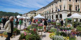 Salò Garda Flower: summer edition