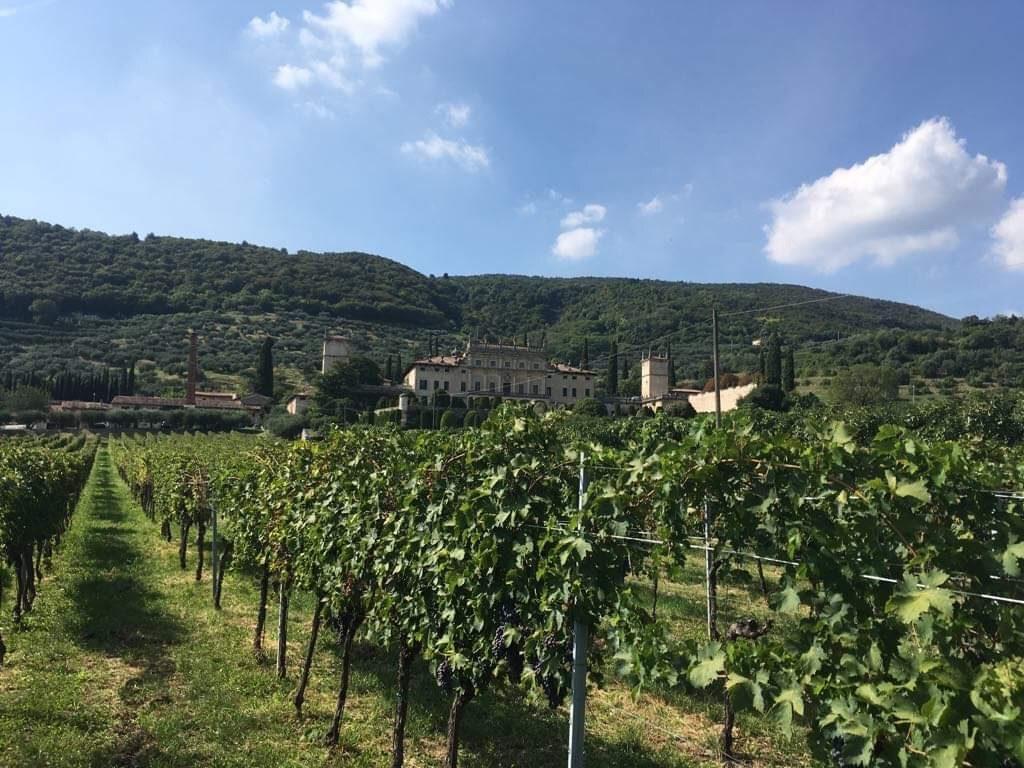 vigna Frantoio Villa Arvedi