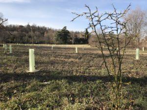 Officina delle Erbe del Garda - piantiamo alberi
