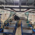 """Previsti 45 milioni di """"nuovi nati"""" per gli incubatoi ittici regionali di Desenzano e Clusane"""