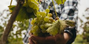 Golf: a Pozzolengo l'OPEN D'ITALIA<br>Lugana vino ufficiale dell'evento