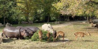 Parchi zoologici chiusi <br>senza aiuti